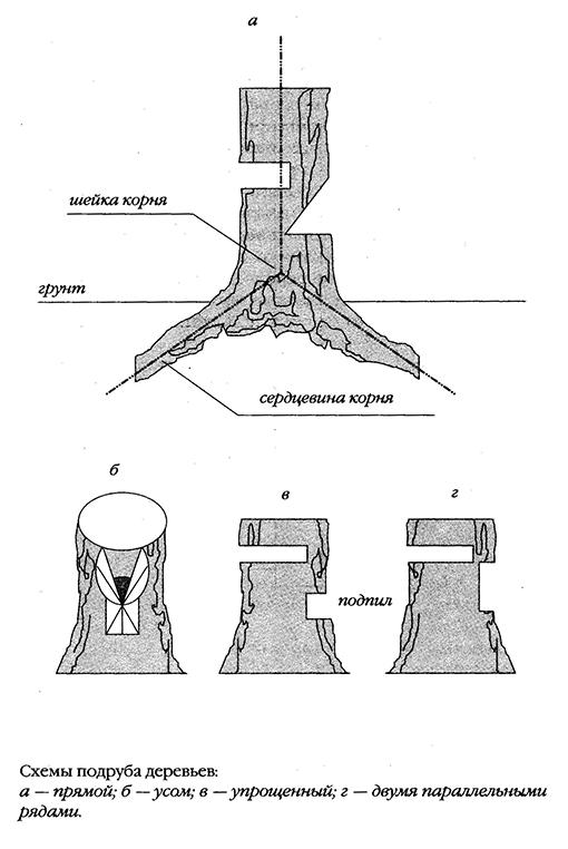 подруб дерева